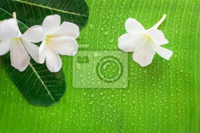 Image: Renseignements sur le spa zen, fleur de frangipanier ou de plumeria,