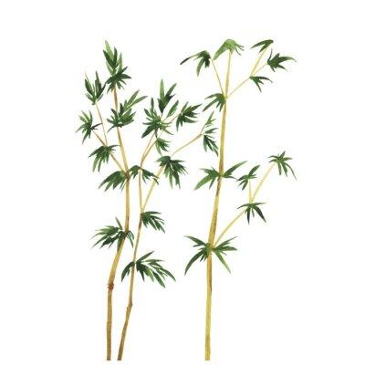 Image Résumé des arbres de bambou sauvage sur fond blanc. Main, dessiné, aquarelle, vecteur, Illustration.