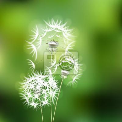 Image Resume Fond Vert Avec Des Fleurs De Pissenlit