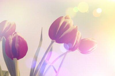 Image Rétro tulipes