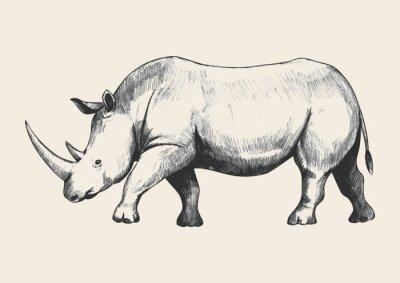 Image Rhino Sketch