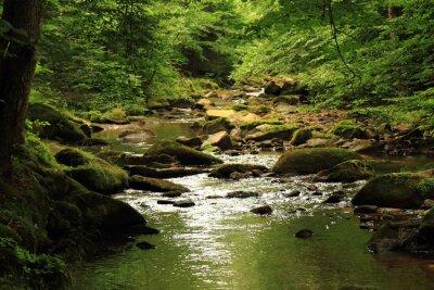 Image rivière dans la forêt