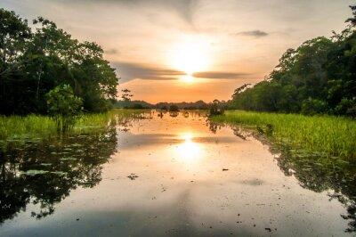Image Rivière dans la forêt amazonienne, au crépuscule, au Pérou, en Amérique du Sud