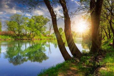 Image rivière de la forêt avec des pierres et l'herbe au coucher du soleil