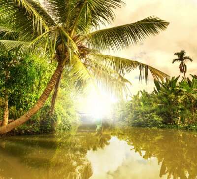 Image Rivière tropicale