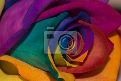 Rose Multicolore Peintures Murales Tableaux Petales De Fleurs