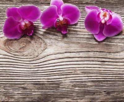 Image Rose, orchidée, fleurs, bois, fond