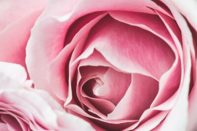 Image Rose, rose, fleur, peu profond, champ, foyer, centre, rose, fleur