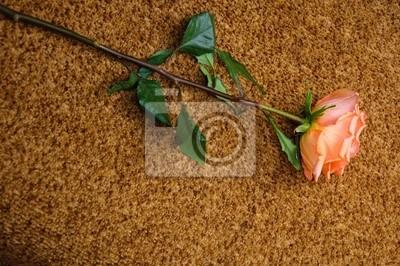 Rose sur un fond de laine