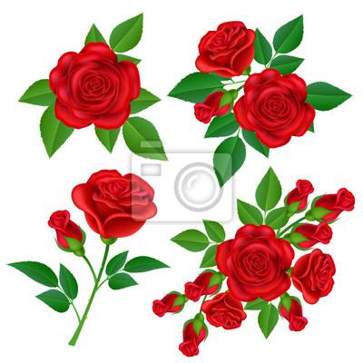 Rouge Rose Fleur Ensemble Avec Des Bourgeons Et Des Feuilles