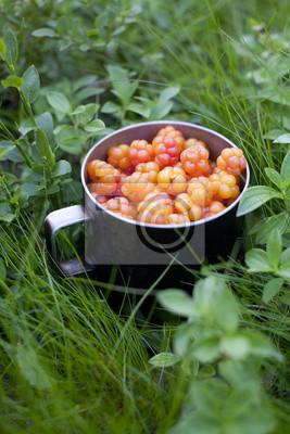 Rubus moros chamaemorus Mulberry fruits herbes