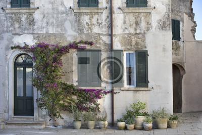 rue de Marciana de plantes à fleurs