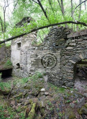 ruines envahies dans la forêt
