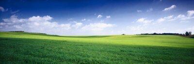 Image russie paysage d'été - fileds vert, le bleu ciel et blanc c