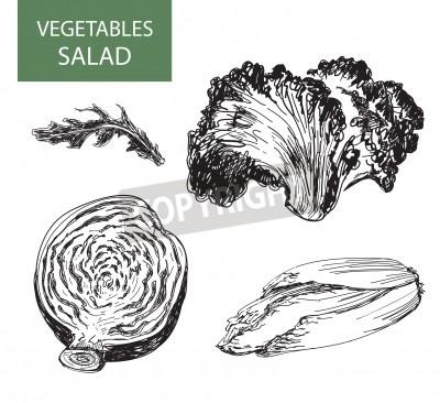 Image Salade Ensemble De Vecteur Illustration Dessin à La Main