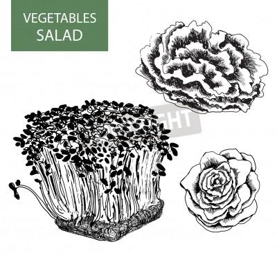Image Salade Ensemble De Vector Illustration Dessin à La Main