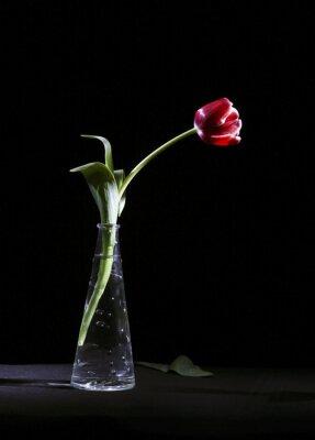 Image Samotny tulipan