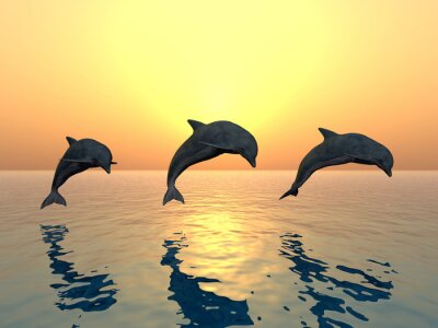 Image Saut des dauphins