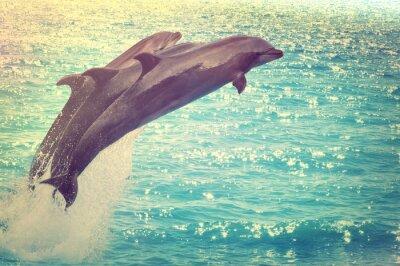 Image sauter, dauphins