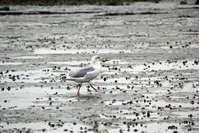 Image Seagull au crabe dans son bec dans la boue
