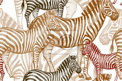 Seamless Vecteur Modele Africaine Animaux Colore Zebra Sur
