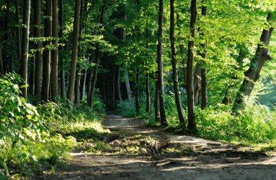 Image sentier dans la forêt