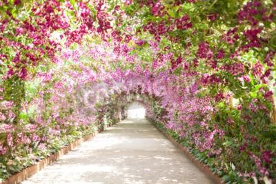 Image sentier dans un jardin botanique avec des orchidées qui bordent le chemin.