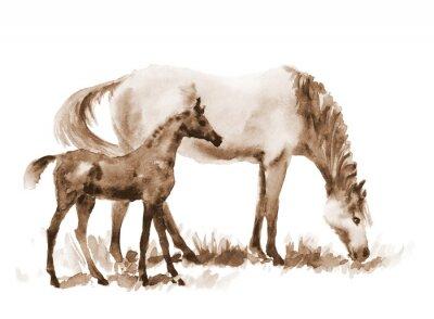 Image Sépia aquarelle jument et poulain sur fond blanc. Belle illustration peinte à la main de deux chevaux sur le terrain.