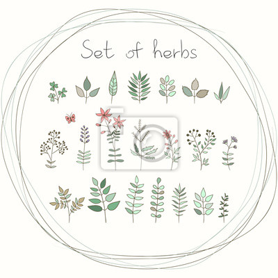 Set of vector doodle herbs and flowers.