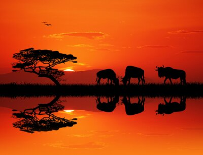 Image Silhouette de wildebeest au coucher du soleil