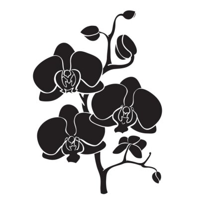 Image Silhouette orchid branch