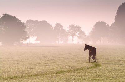 Image silhouette poulain sur les pâturages dans le brouillard