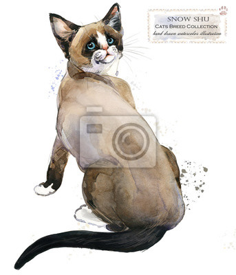 Snow shu cat. home pet. breed of Cats series. cute kitten. watercolor domestic animal illustration.