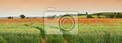 Image spectacular Tuscany spring landscape with red poppies in a green wheat field, near Monteroni d'Arbia, (Siena) Tuscany. Italy, Europe.