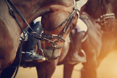 Image SPORTS chevaux bruns avant les compétitions.