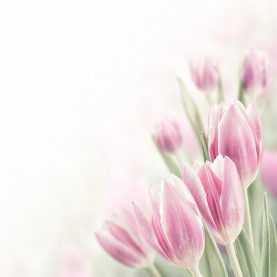 Image Spring Background with Tulip