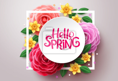 Image Spring flower vector background. Hello spring text in white frame space and colorful camellia and crocus flowers in white background. Vector illustration.
