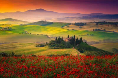 Image Stunning red poppies blossom on meadows in Tuscany, Pienza, Italy
