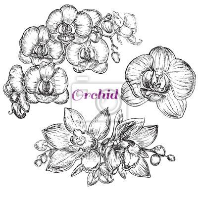 Image style de croquis orchidée noire