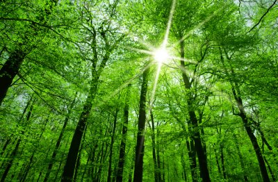Image sun shining through tree branches