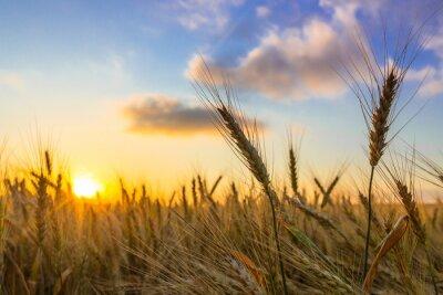 Image Sunrise.