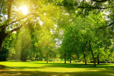 Image Sunrise beam in the beautiful park.