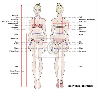 Anatomie Corps Humain Femme tableau de mesure du corps de la femme. schéma de mesure du corps