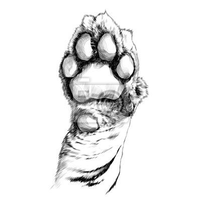 Tampons De Patte De Tigre Croquis Vecteur Graphique Dessin En