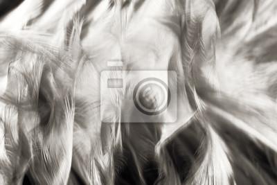 Tendances de couleur vintage en noir et blanc texture de la