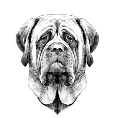 Image Tête De Chien Race Mastiff Dessin Animé Dessin Graphique Noir