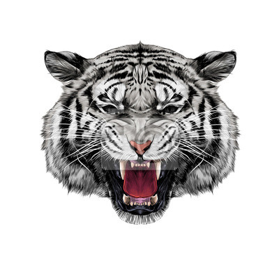 T te de tigre blanc croquant croquis vecteur graphiques - Image tete de tigre ...