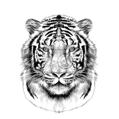 T te de tigre plein visage sym trique croquis vecteur graphique peintures murales tableaux - Image dessin tigre ...