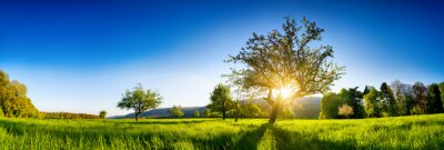 Image The sun shining through a tree on a green meadow, a panoramic vibrant rural landscape with clear blue sky before sunset