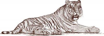 Image tigre couché